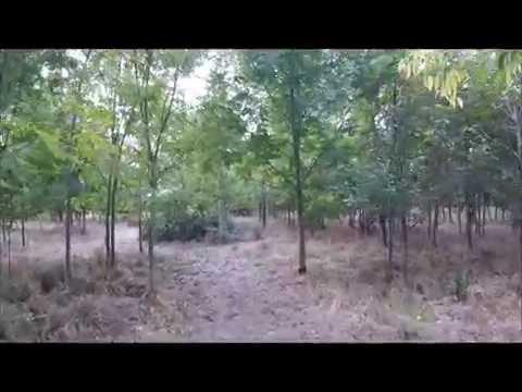 Woodland Escape walk video